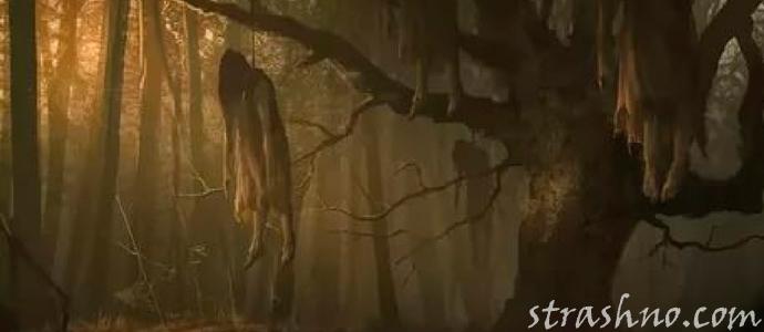 мистическая история о страшной мести покойника