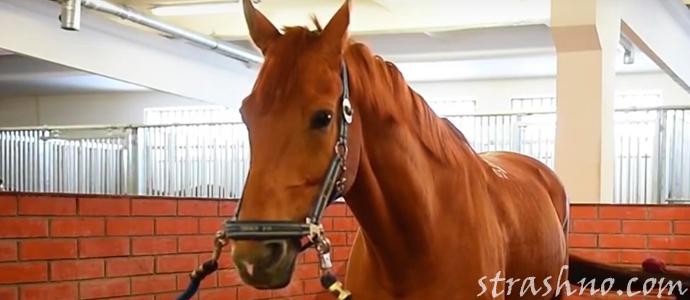 история о страшном и мистическом поведении коня