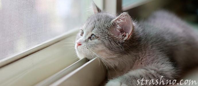 история о мистическом поведении кота