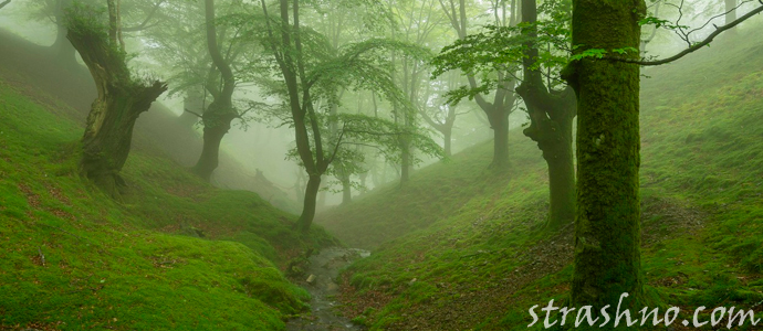 история о лесной мистике и тумане