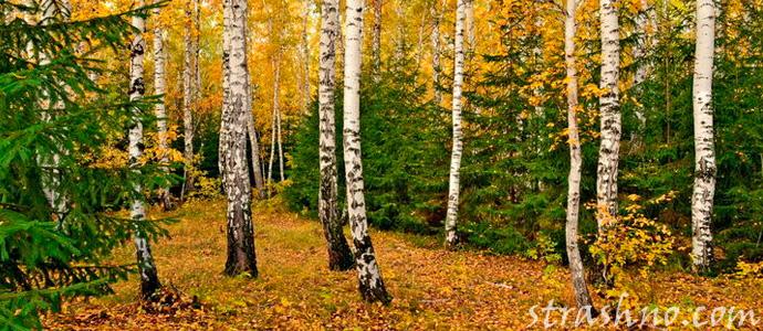 история о мистике в лесу