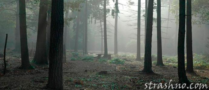 лес в сказках и фильмах