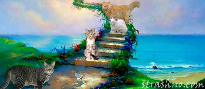 мистическая история о душе погибшего кота