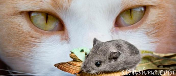 история о мистическом появлении мышей к беде