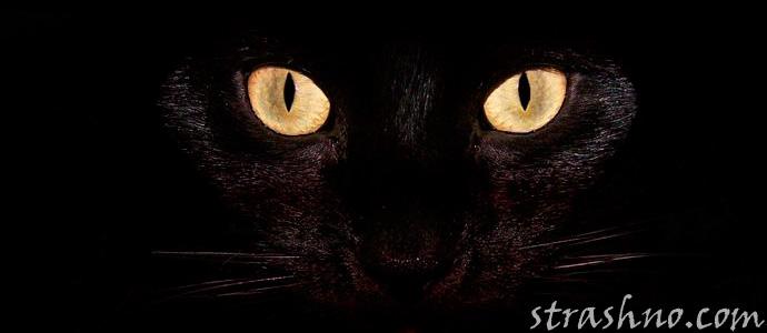 Про черного кота - мистическая история