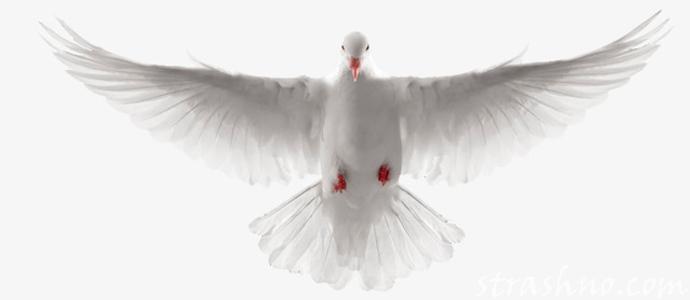 мистическая история о странной тени птицы