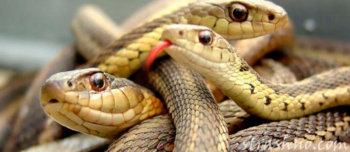 мистическая история о подарке змеи
