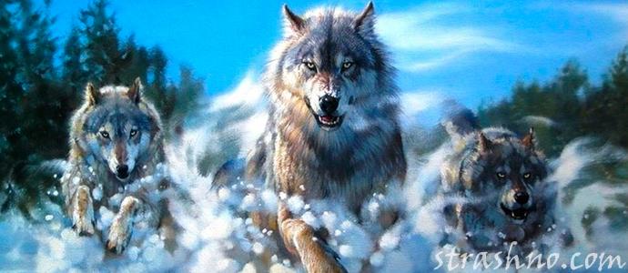 художественный рассказ о страшной встрече с волками