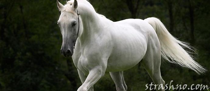 мистическая история о белой лошади в подземном переходе