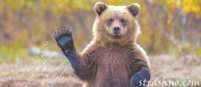 страшная история о встрече с медведем