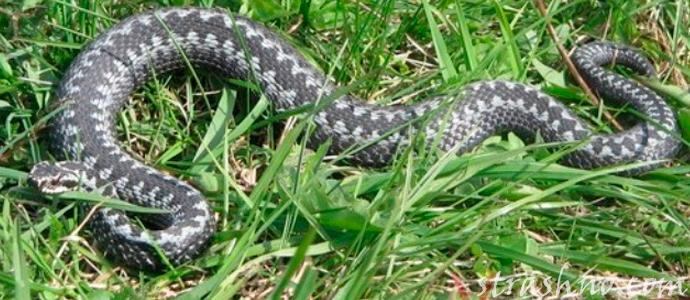 мистическая история о встрече со змеями на сельском кладбище
