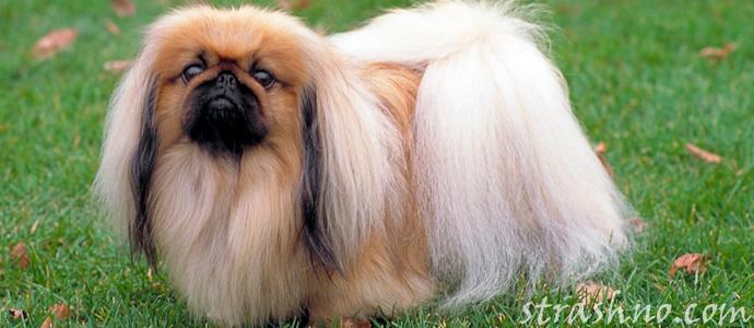 история о странном поведении собаки