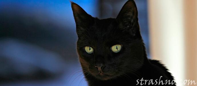 история о ведьме и черной кошке