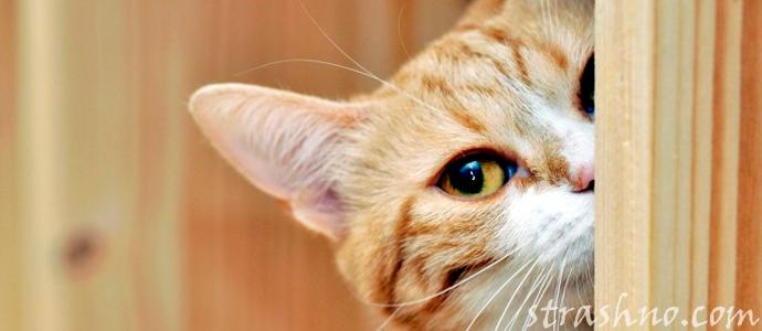 история о коте-воришке