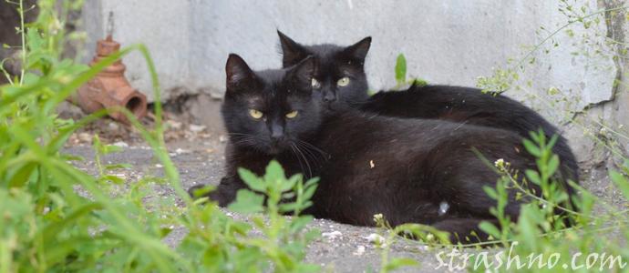 история о пустой квартире и черных кошках