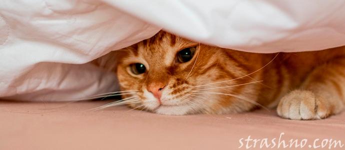 история о рыжей кошке