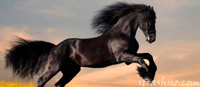 история о вещем сне про черного коня