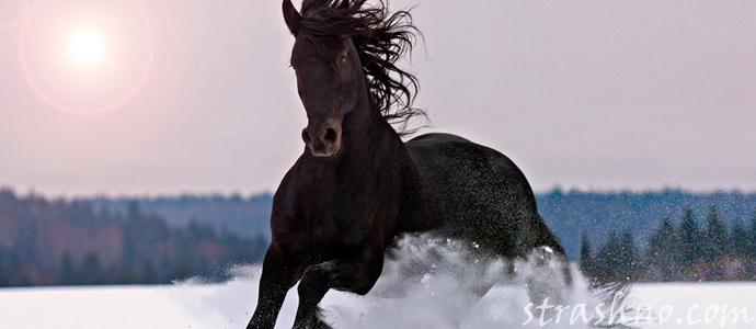 история о мистическом коне