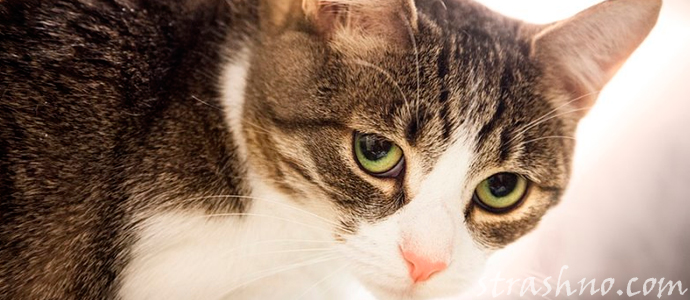 мистическое поведение кошки накануне трагедии
