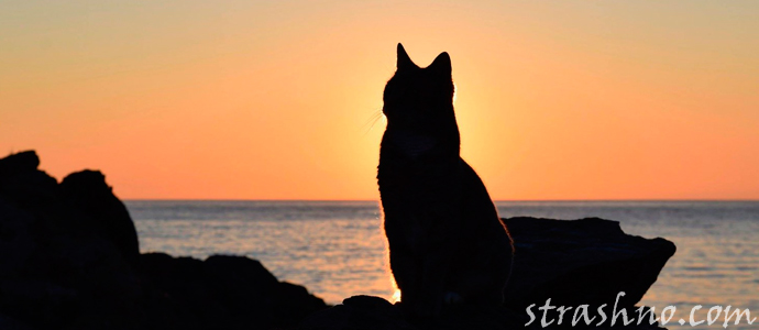 кошка с мистического острова