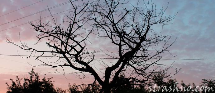 история о мистике сухого дерева
