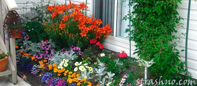 палисадник с цветами
