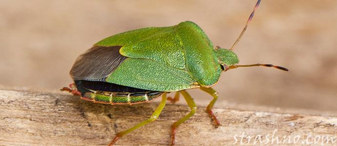 история о страшном укусе жука