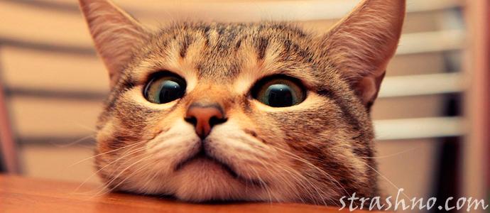 кот видит домового