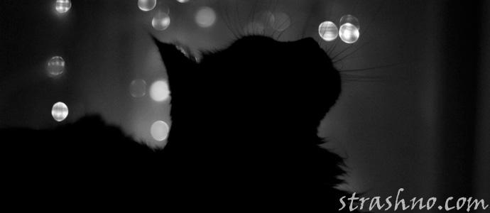 черная кошка на окне