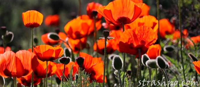 цветы в раю