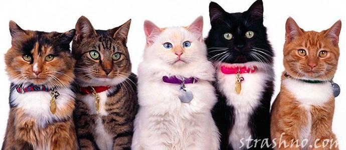 что значит цвет кошки