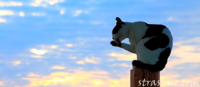 история о поведении кота на похоронах