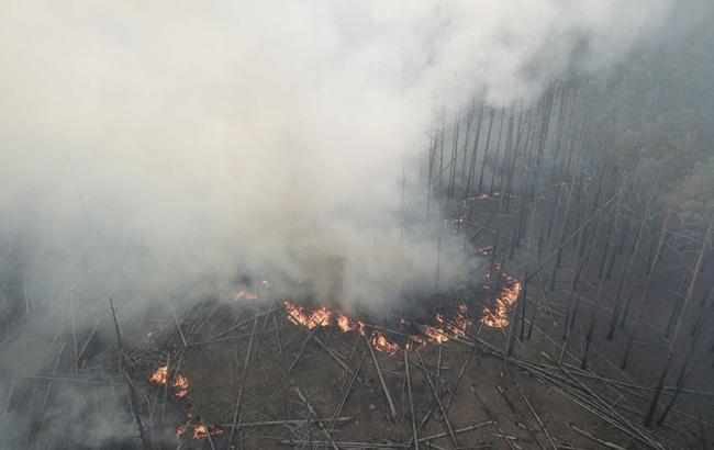 пожар в чернобыльском сосновом лесу
