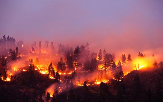 апрель 2020 года: горит чернобыльский лес