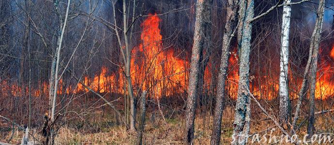 пожар в Чернобыле в апреле 2020 года