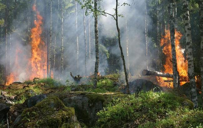 лесной пожар в зоне отчуждения