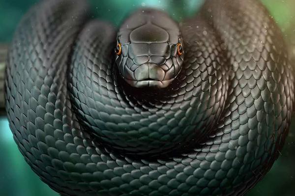 змея черная мамба