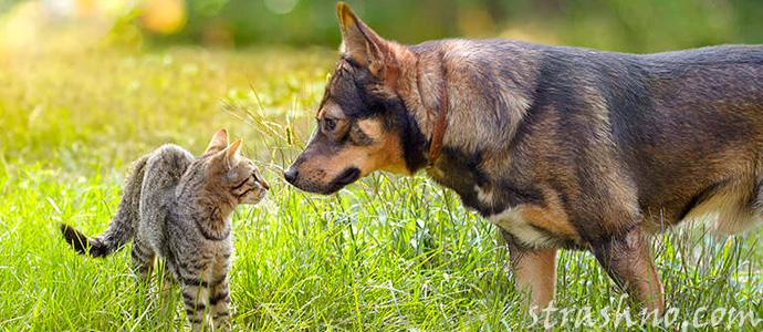 кот и собака