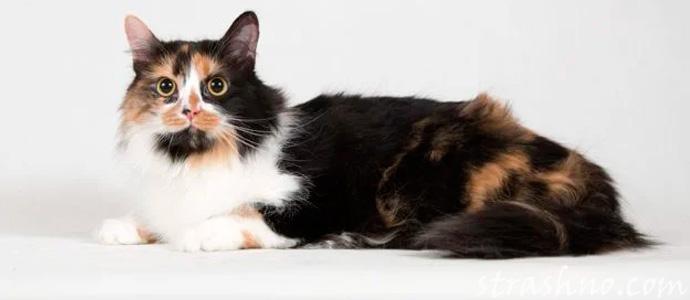 история о необычной кошке