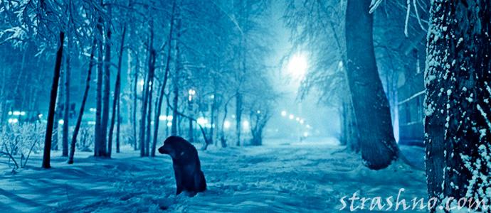 прогулка с собакой зимним вечером