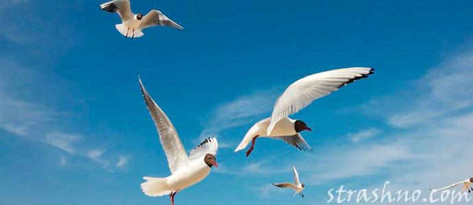 души умерших переселились в птиц