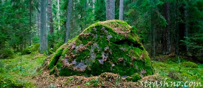 камень Лешего в лесу