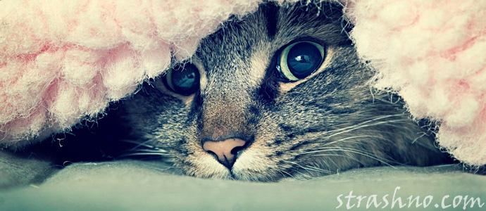 испуганная домовым кошка