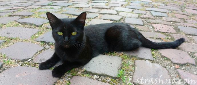 черная кошка и любовный приворот