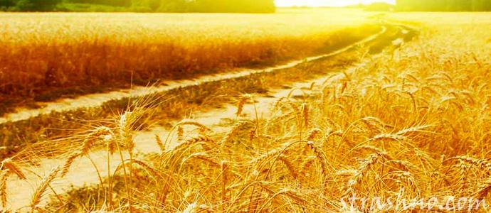 Что означает дорога через пшеничное поле во сне