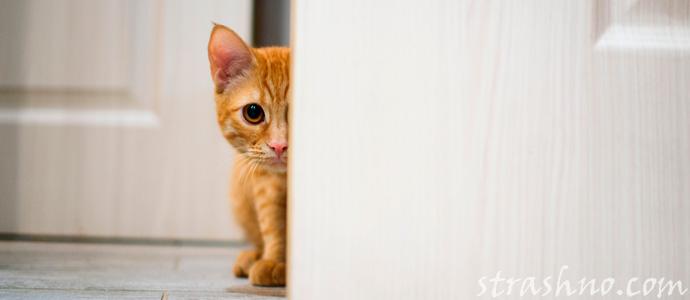 испуганный домовым кот
