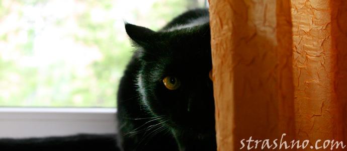история про кота и домового