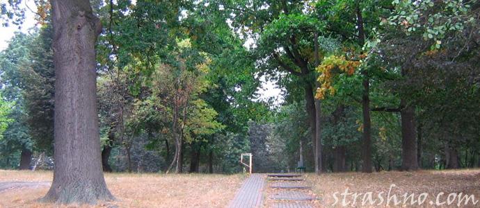 мистика старого парка