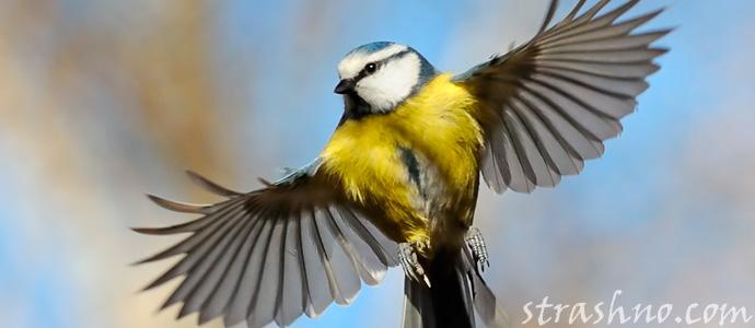 птицы и мистика