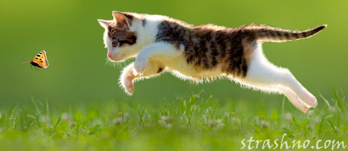 наказание за кошек